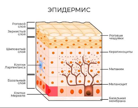 Онкодерматология